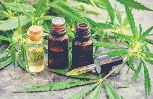 ¿Cual es Furor de el Aceite de Cannabis?